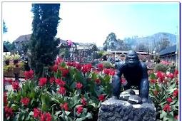 Taman Bunga Begonia : Harga Tiket Masuk dan Rute Menuju Lokasi