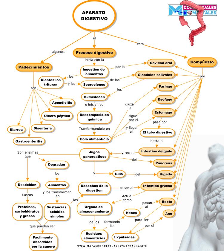 Mapa conceptual del Aparato digestivo nuevo con funciones, partes y enfermedades