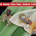 Penyamaran Kupu-Kupu ,Rupa Dan Bau Seakan Seperti Dua Ekor Lalat Sedang Menikmati Najis Burung