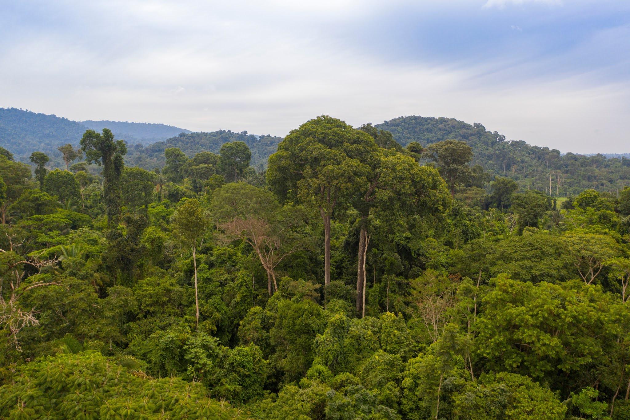 Pesquisadores fazem mapeamento do DNA da Amazônia na região de Carajás