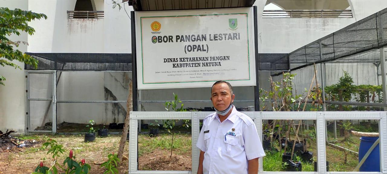 Dinas Ketahanan Pangan Natuna Himbau Masyarakat Manfaatkan Pekarangan Rumah Dengan Strategi P2L dan OPAL