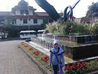 Angsa Hitam | Maskot Taman Bunga Nusantara