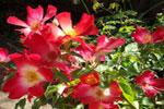Flores, órganos de reproducción de las plantas fanerógamas