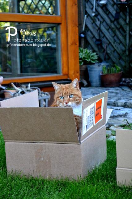 Katze Mimi sitzt in einem Karton