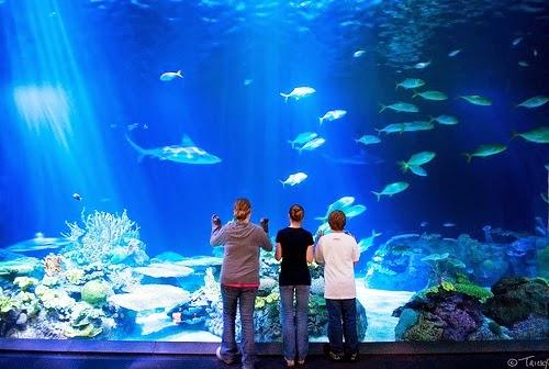 Shedd Aquarium em Chicago