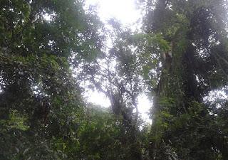 Angra dos Reis - Política Nacional de Recuperação da Vegetação Nativa Angra dos Reis by RGS