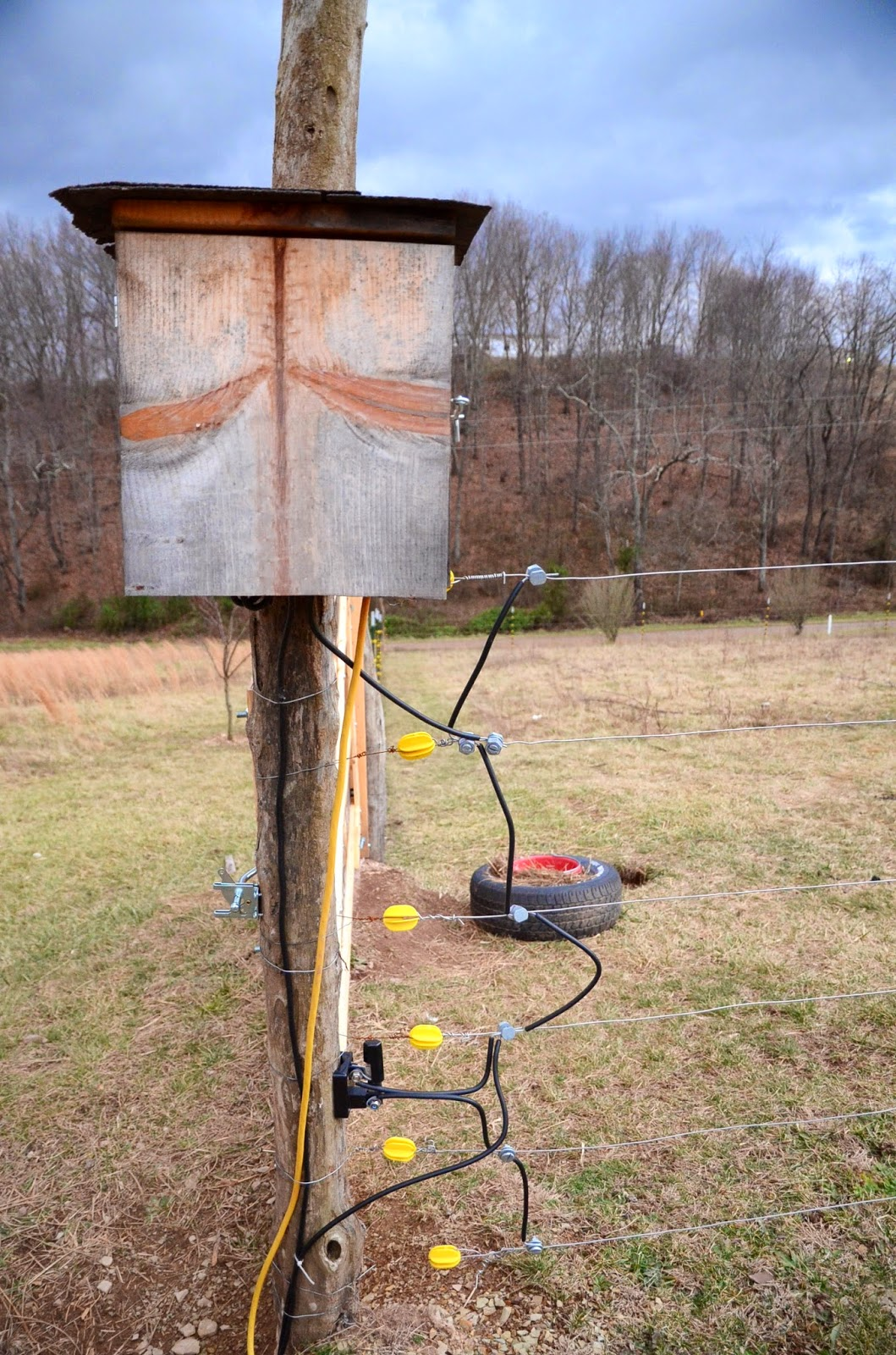 Electric Fence For My Nigerian Dwarf Goats Journey To Eve