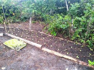 Moradores da Ecovila Juruvaúva iniciam horta comunitária