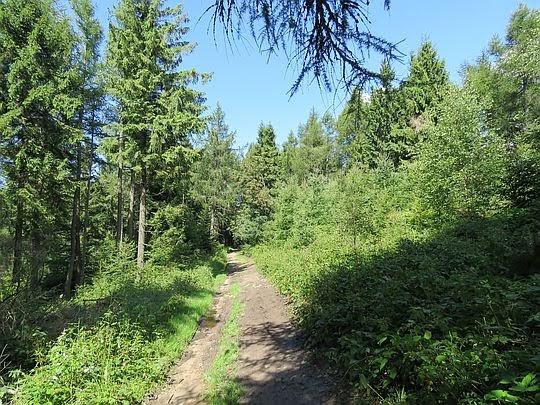 Powoli wchodzimy do lasu.