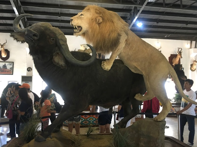 Baluarte is one of the tourist spots in Vigan Ilocos Sur and is one of the tourist spots on your Ilocos Tour itinerary