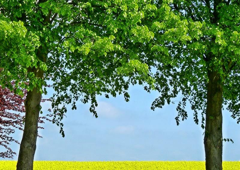 Grüne Bäume und gelbes Rapsfeld