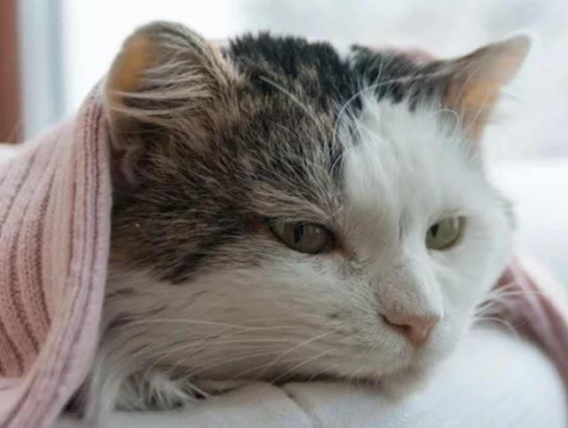 Penyakit Kucing