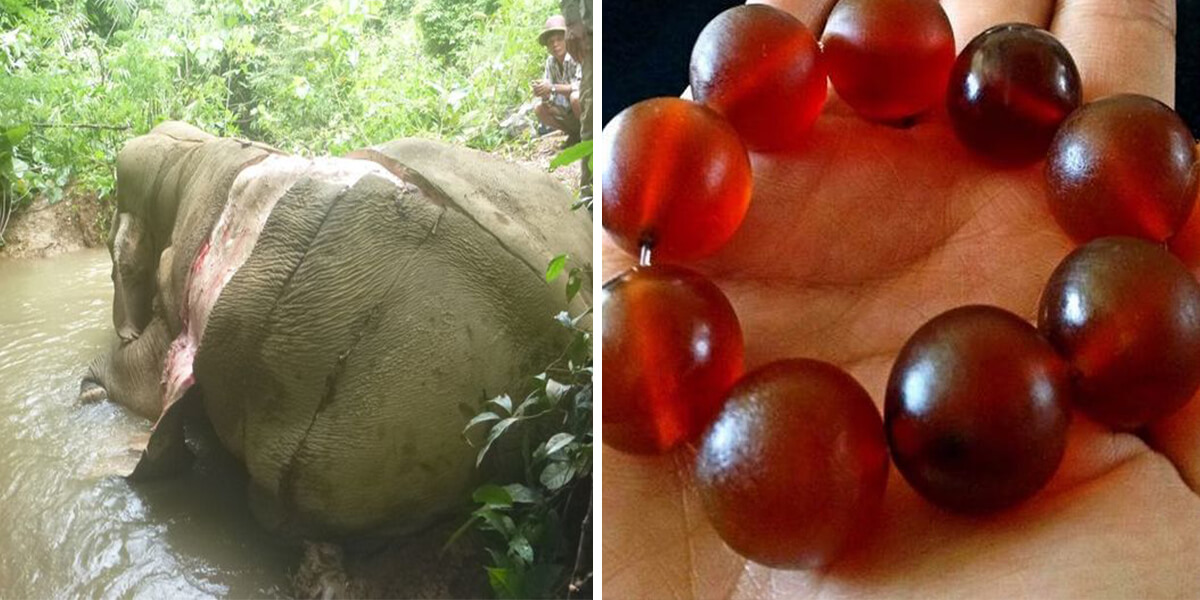People In China Are Removing The Skins Of Elephants To Make Jewelry
