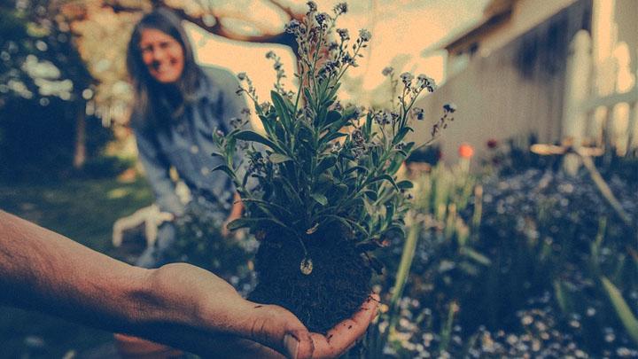 Productive Creative Garden Ideas