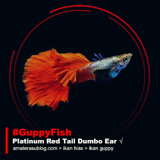 Jenis Ikan Guppy Terpopuler di Indonesia