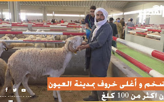 أضخم و أغلى خروف بمدينة العيون يزن اكثر من 100 كلغ