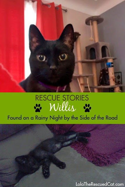 Rescue stories|rescued cats
