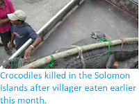 https://sciencythoughts.blogspot.com/2019/06/crocodiles-killed-in-solomon-islands.html