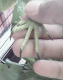 Cara Memotong Kuku Iguana yang Baik dan Benar