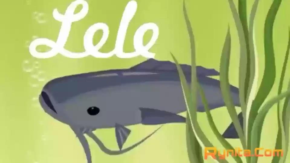 Cara Budidaya Ikan Lele di Kolam Terpal  Bagi Pemula