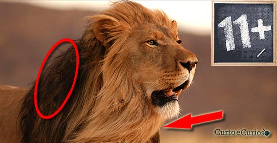 11 coisas impressionantes que você não sabia sobre os leões