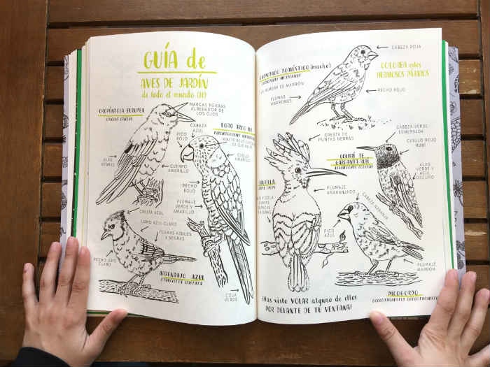 libros cuentos infantiles naturaleza, colorear hola natura nina chakrabarti