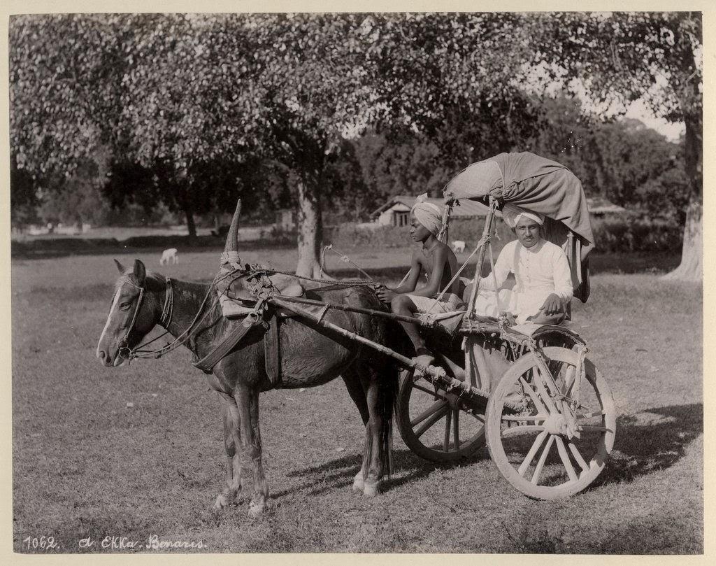 Indian Horse Cart (Ekka) - Benares (Varanasi) c.1890's