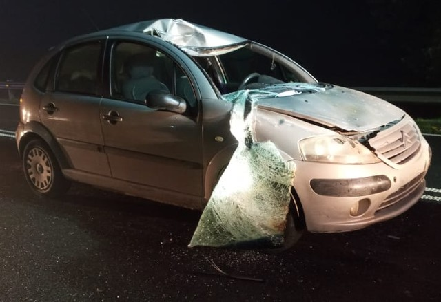 Automóvil colisionó con caballo