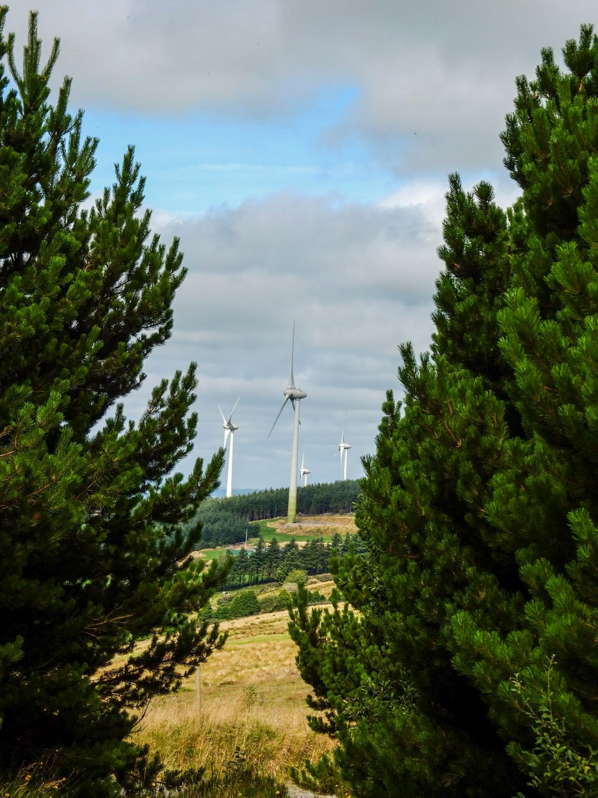 A view of a windmill between two coniferous trees in the Boggeragh Mountains, Co.Cork.