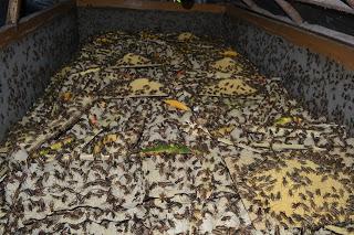 beternak serangga jangkrik ternak jangkrik ternak jangkrik ternak jangkrik ternak jangkrik ternak jangkrik ternak jangkrik ternak jangkrik ternak jangkrik