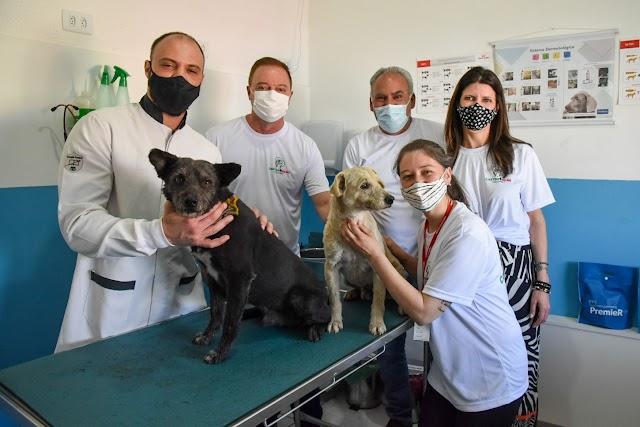Prefeitura de Colombo lança programa para castração gratuita de cães e gatos: Castra MAIS Ação