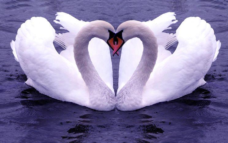 Iubirea - emoție... și simțire profundă