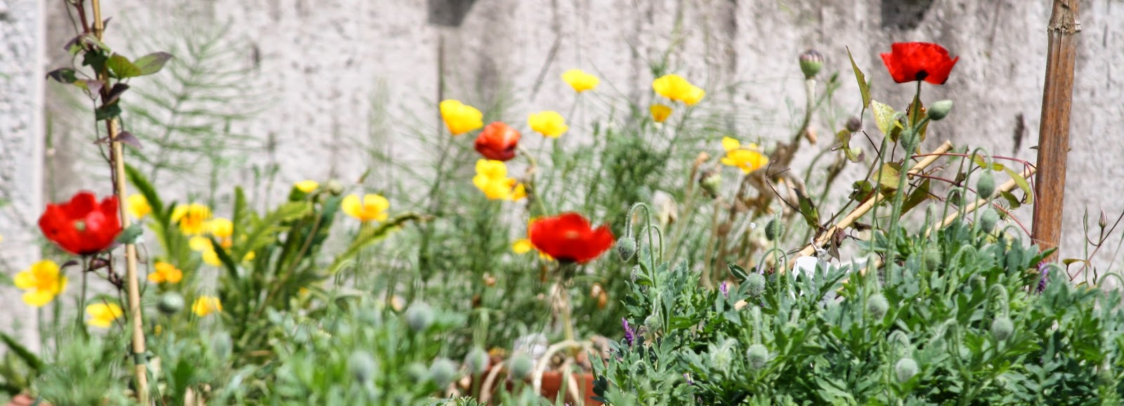 Plant, Handmade Monday : Poppies In The Garden