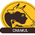 CHAMUL Recruitment 2019