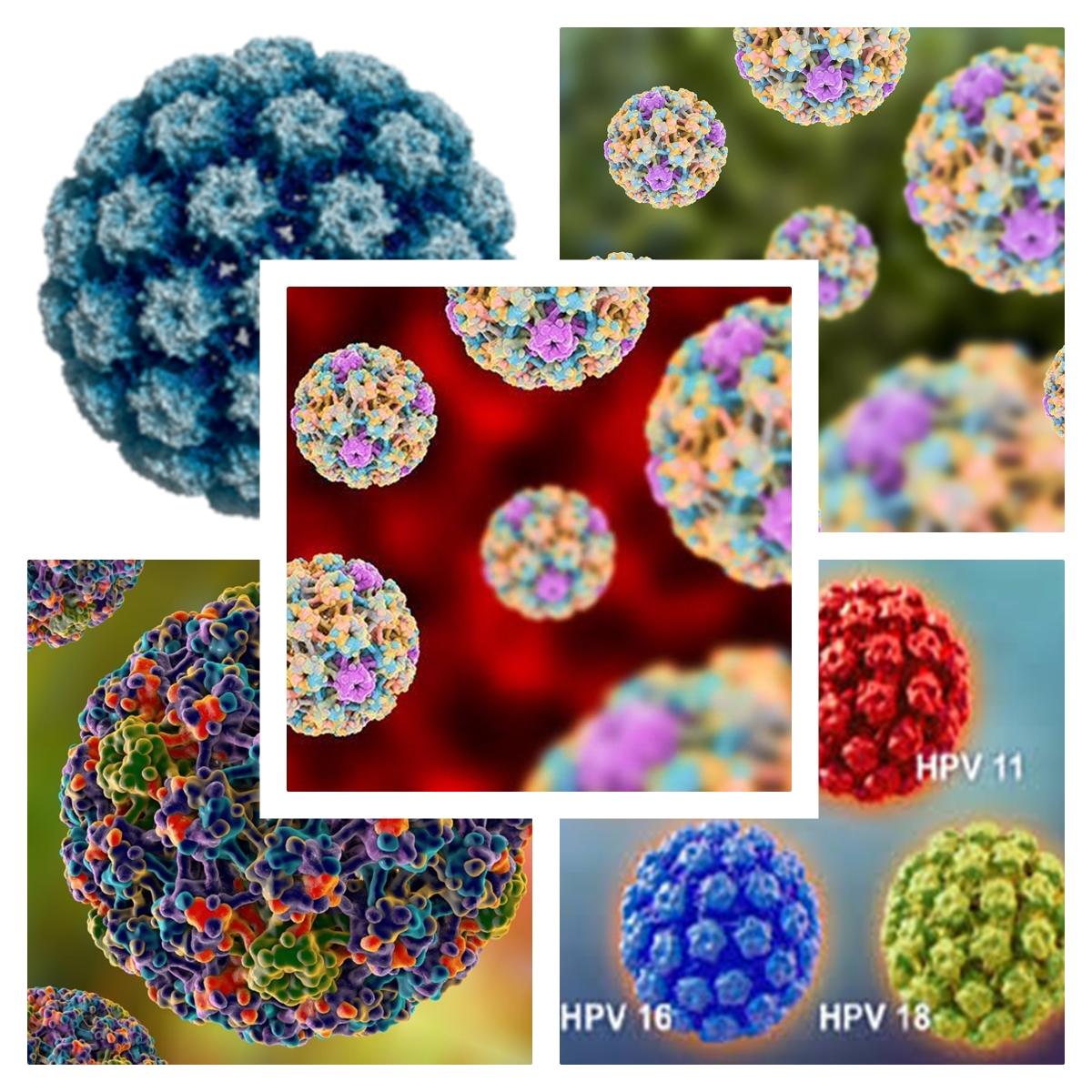 Infectia cu HPV: Cauze, simptome, tratament, preventie   Bioclinica