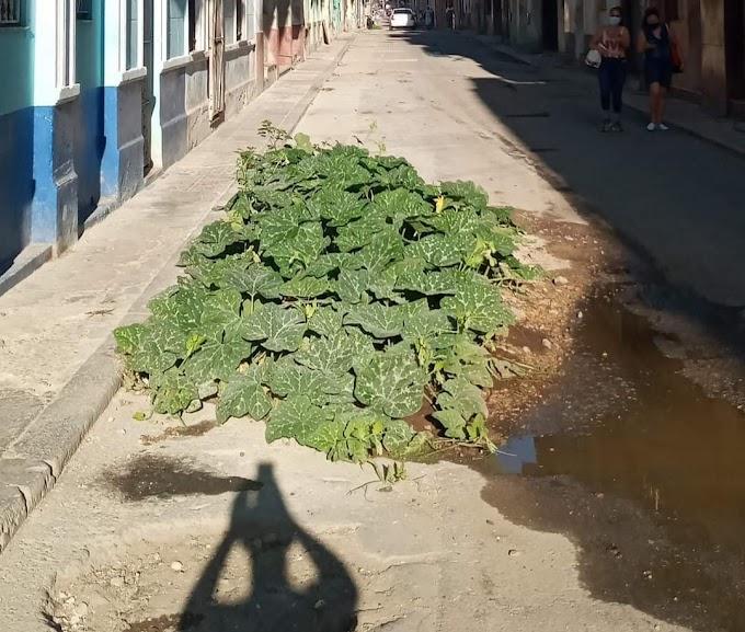 Agricultura en baches comienza a dar frutos, reportan desde La Habana