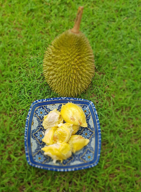 durian fruit benefits pregnancy, durian fruit benefits in tamil, durian fruit uses in tamil, durian calories 100g, benefits of durian seeds, durian skin or husk, is durian fruit good, is durian good for cancer patient, is durian heaty, durian husk or skin, does durian fruit taste good, can i eat durian everyday, eat durian during period, is durian keto friendly, where is durian banned, tropical fruit benefits, durian for breakfast, durian fruit taste, durian fruit vs jackfruit, durian benefits and side effects, eating durian at night, durian fruit in spanish, is durian fattening, durian fruit online, durian calories, eating durian at night, is durian good, durian fruit benefits in tamil, benefits of durian seeds, durian benefits for fertility, durian fruit benefits in hindi, durian leaves benefits, blog with cris, malaysia travel, malaysia travel influencer