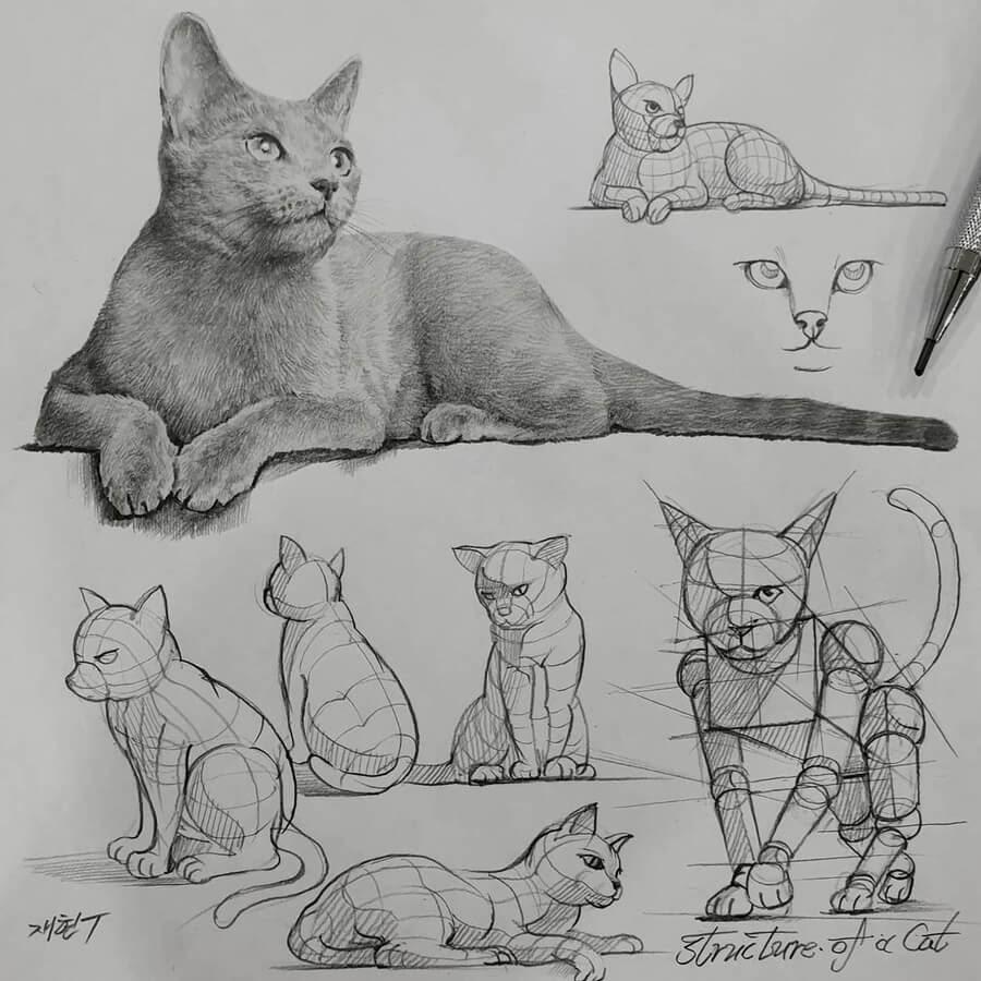 04-Cat-resting-anjjaemi-www-designstack-co