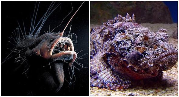 5 Hewan Laut Seram Ini Dikagumi Karena Keunikannya Yang Luar Biasa