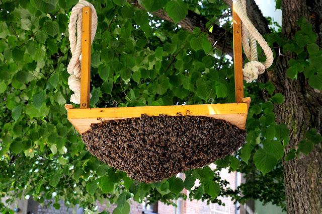 wild%2Bswarm%2Bof%2Bbees.jpg