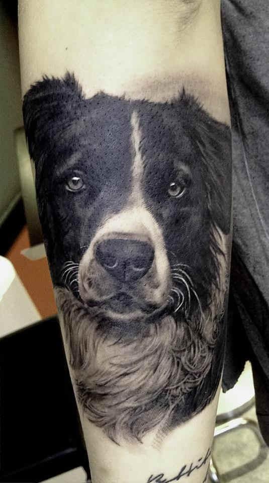 La imagen de un perro pastor en el brazo, tiene una mirada penetrante