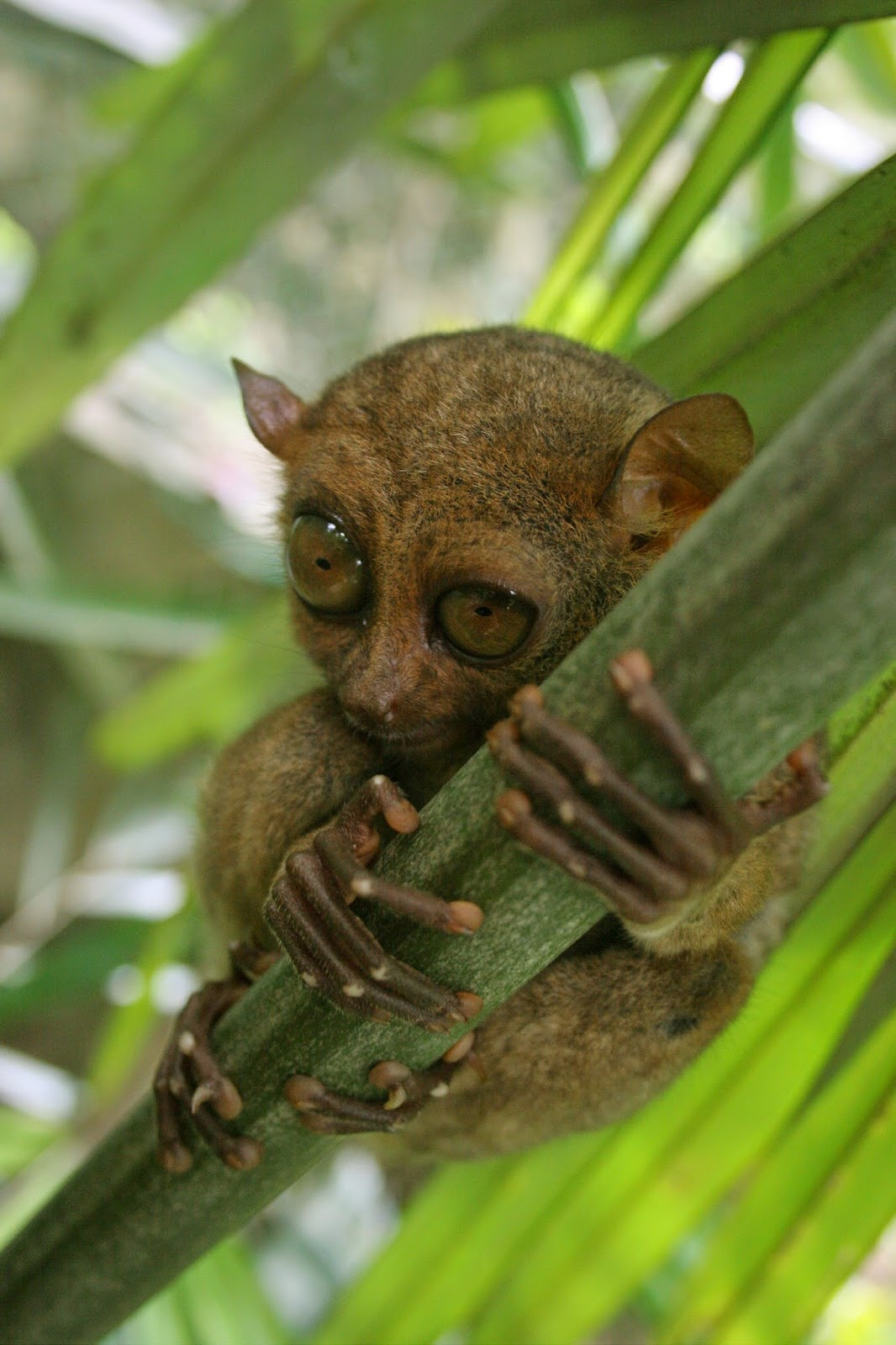 Wild animals and flowers we've seen in the Philippines ...  |The Philippines Animal