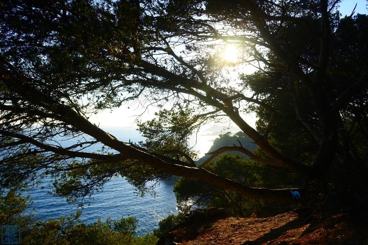 Le Chameau Bleu - Blog Voyage Sud Est France - Vue depuis le Mont Salva - Brusc - Var