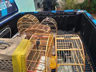 Denúncia anônima leva Guarda Ambiental a estourar cativeiro de passarinhos em Cotia