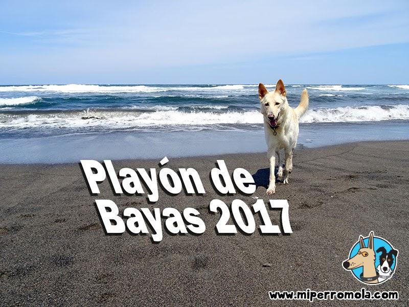 Can de Palleiro en el Playón de Bayas la Playa Canina de Castrillón en Asturias