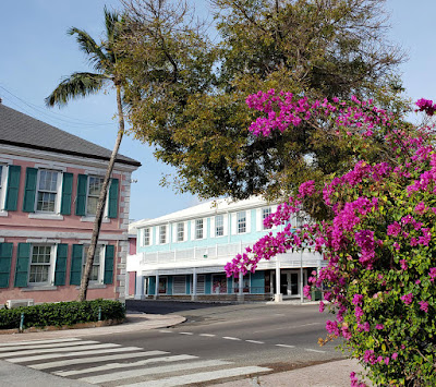 Bougainvillea flowers and colonial styled buildings