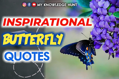 Inspirational butterfly quotes, quotes on butterfly
