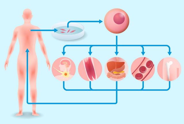 Investing in Regenerative Medicine at the Local Level
