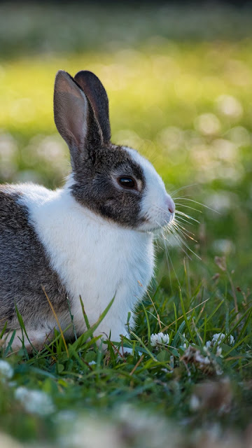 Wallpaper free rabbit, grass, white flowers