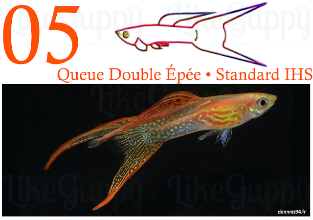 guppy-queue-double-epee-standard-ihs